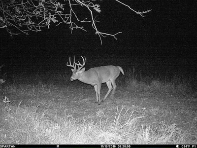 Game Cam DH S of Windmill Okla