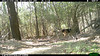 2012-03-01, 05 Backyard Wildlife-17
