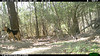 2012-03-01, 05 Backyard Wildlife-18