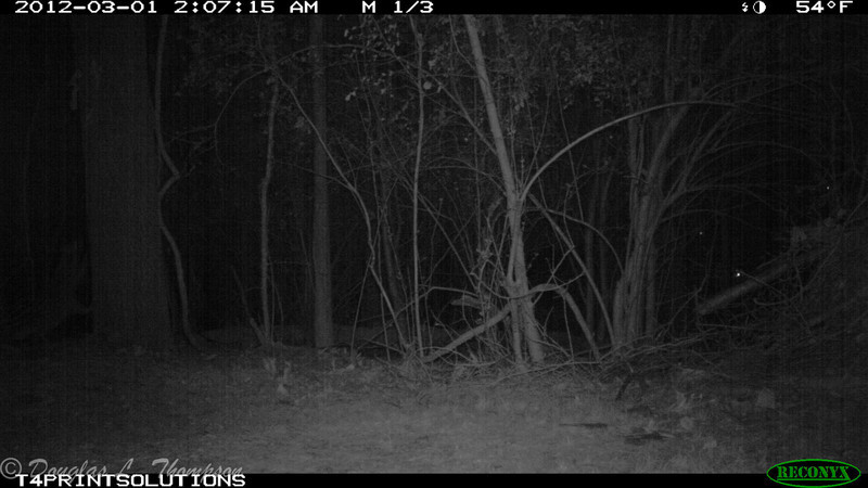 2012-03-01, 05 Backyard Wildlife-1
