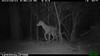 2012-03-01, 05 Backyard Wildlife-2