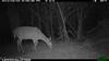 2012-03-01, 05 Backyard Wildlife-8
