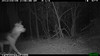 2012-03-01, 05 Backyard Wildlife-14