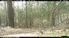 2012-03-01, 05 Backyard Wildlife-3