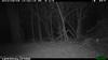2012-03-01, 05 Backyard Wildlife-10