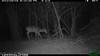 2012-03-01, 05 Backyard Wildlife-9