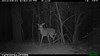 2012-03-01, 05 Backyard Wildlife-4
