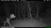 2012-03-01, 05 Backyard Wildlife-15