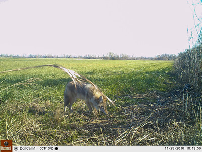 Game Cam N of DH Home Okla