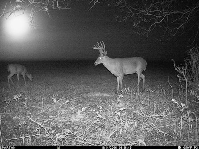 Game Cam OKLA SW Field DH 2016-17