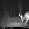 2011-12-01 Backyard Wildlife-1