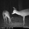 2011-12-01 Backyard Wildlife-7