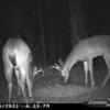 2011-12-01 Backyard Wildlife-12