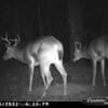 2011-12-01 Backyard Wildlife-5