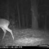 2011-12-01 Backyard Wildlife-15