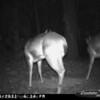 2011-12-01 Backyard Wildlife-4