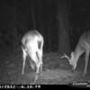 2011-12-01 Backyard Wildlife-6