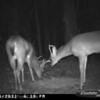 2011-12-01 Backyard Wildlife-8