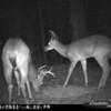 2011-12-01 Backyard Wildlife-11