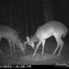 2011-12-01 Backyard Wildlife-14
