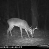 2011-12-01 Backyard Wildlife-20