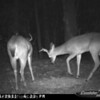 2011-12-01 Backyard Wildlife-10