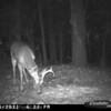 2011-12-01 Backyard Wildlife-19