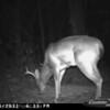 2011-12-01 Backyard Wildlife-2