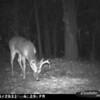 2011-12-01 Backyard Wildlife-18