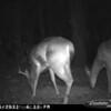 2011-12-01 Backyard Wildlife-3
