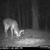 2011-12-01 Backyard Wildlife-17