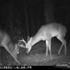 2011-12-01 Backyard Wildlife-13