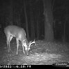 2011-12-01 Backyard Wildlife-16
