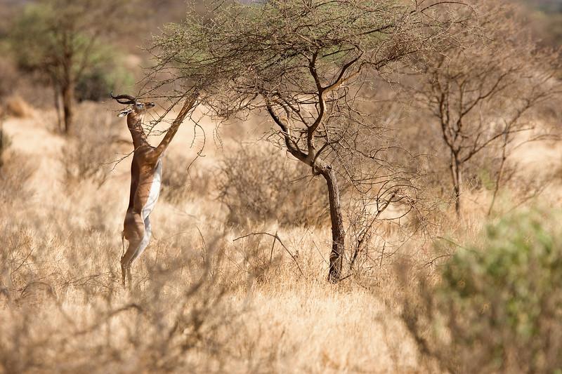 20100903_Samburu_228