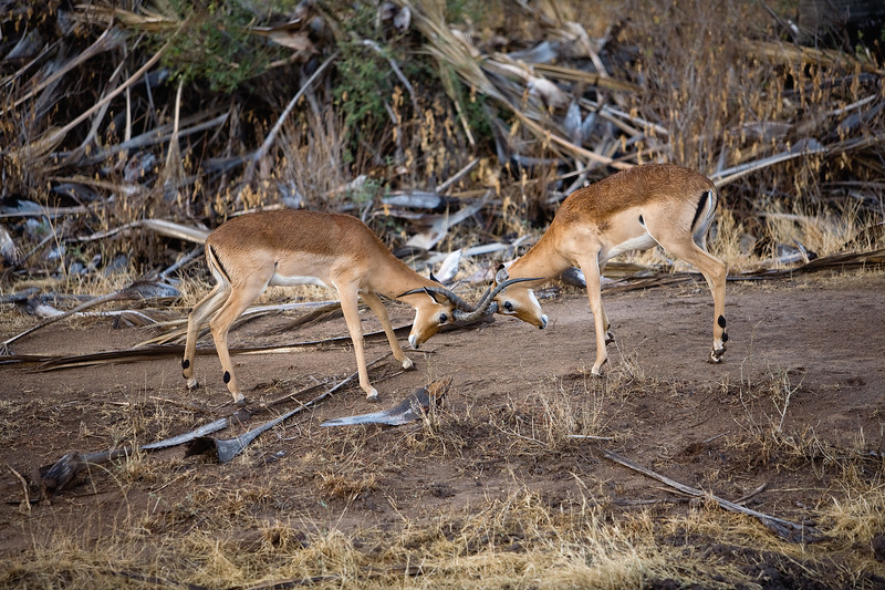 20100904_Samburu_0387