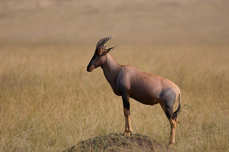 2007 07 25 Masai Mara 705