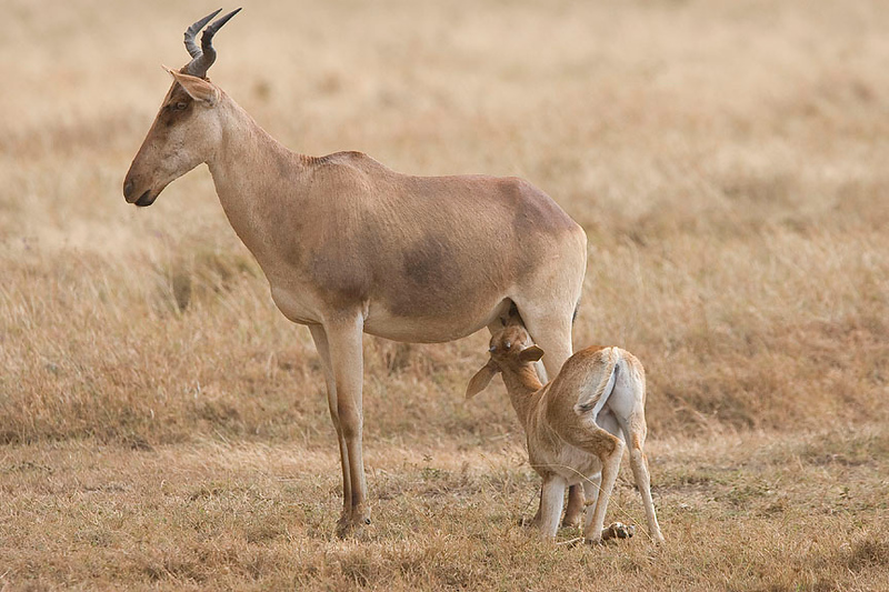 2007 07 18 Ngorongoro 056