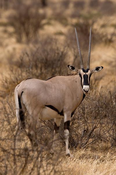 20100902_Samburu_0066