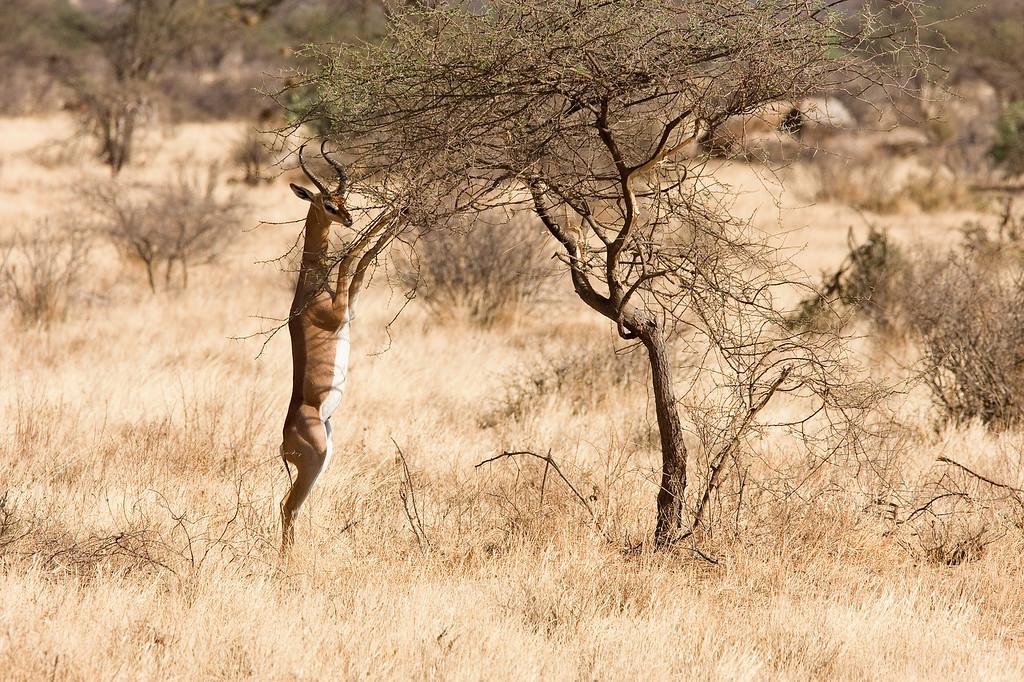 20100903_Samburu_240