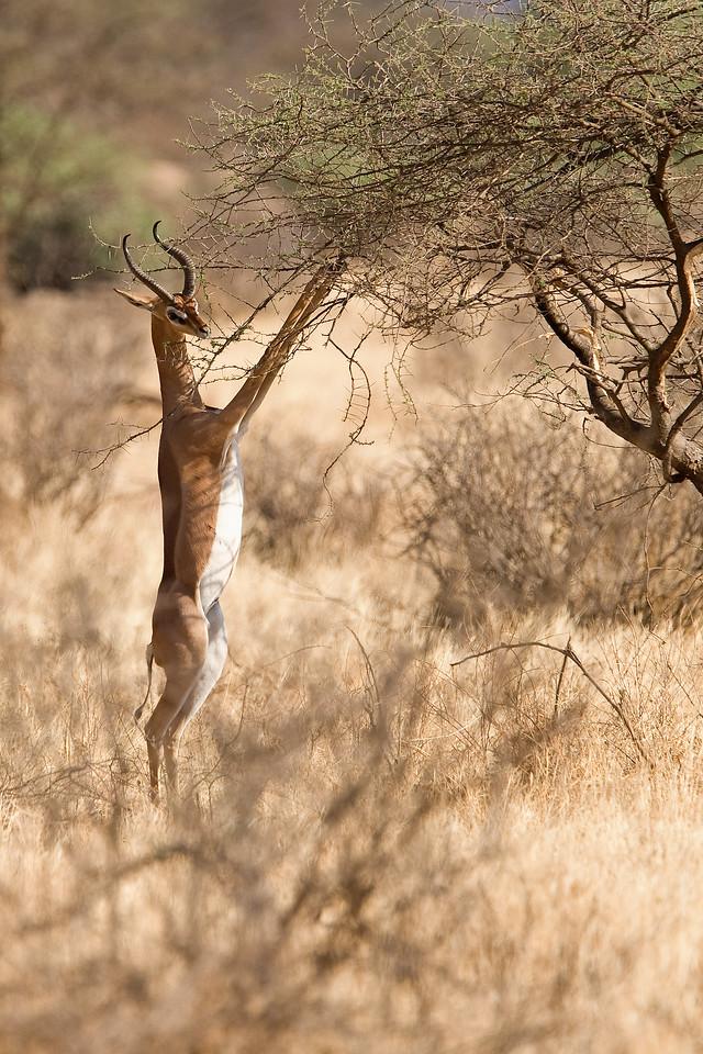 20100903_Samburu_222