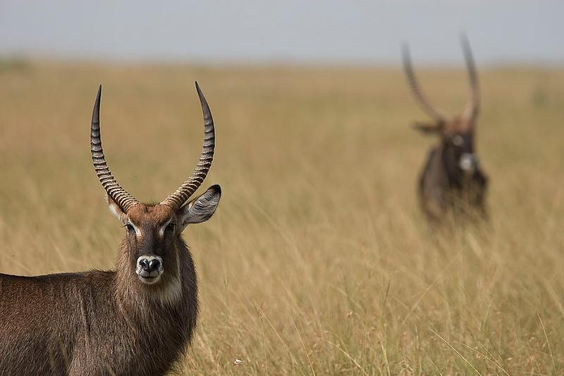 2007 07 24 Masai Mara 281