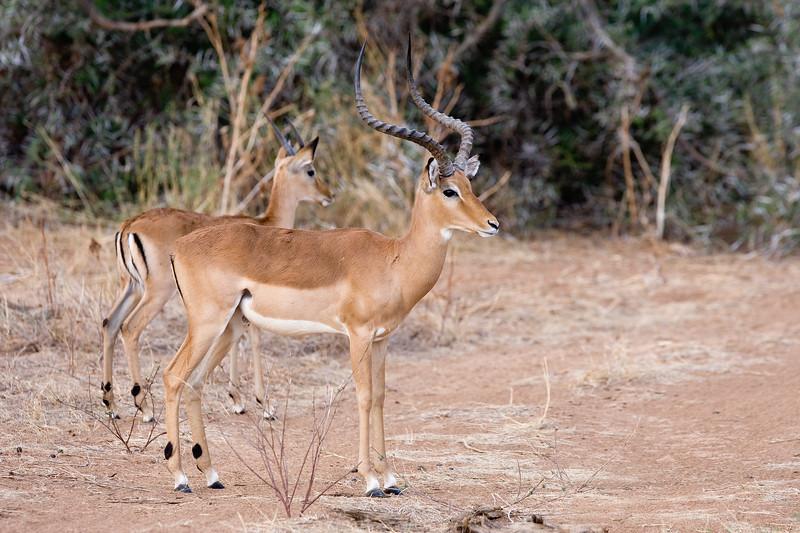 20100903_Samburu_0577