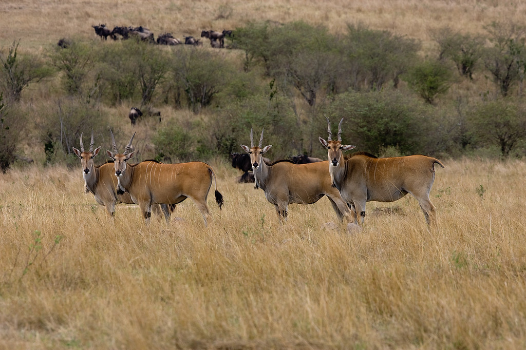 20100911_Maasi Mara_422