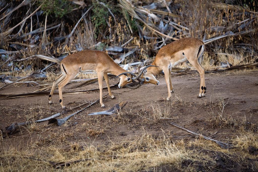 20100904_Samburu_0388