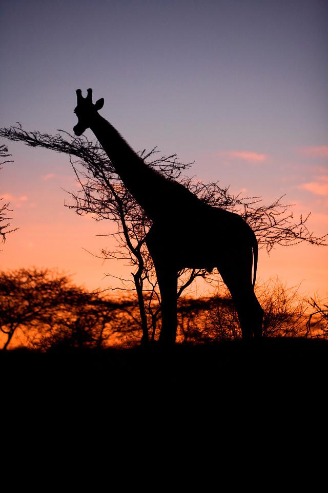 20100905_Samburu_110
