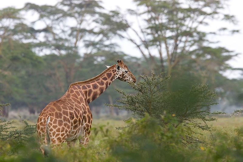 2007 07 21 Lake Nakuru 098