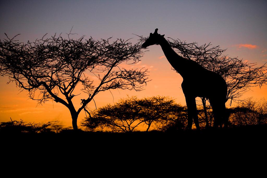 20100905_Samburu_115