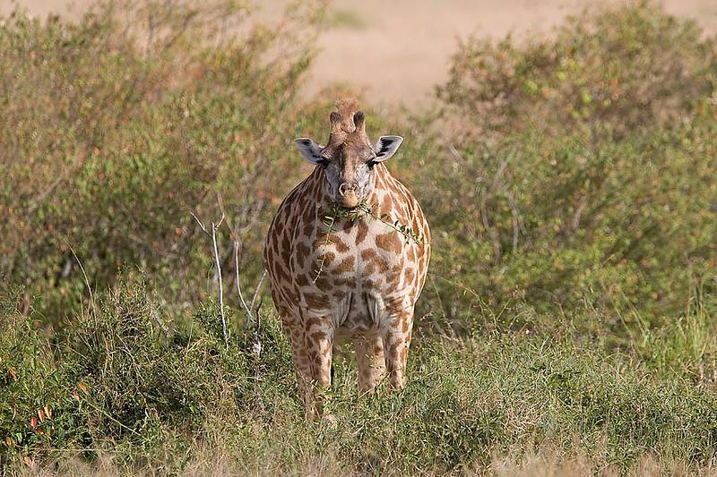 2007 07 24 Masai Mara 314