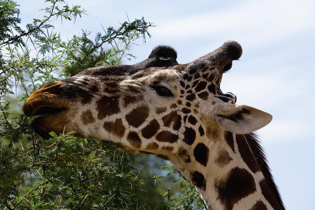 20100903_Samburu_503