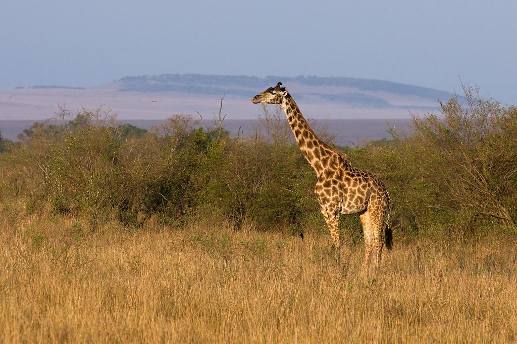 20100911_Maasi Mara_231